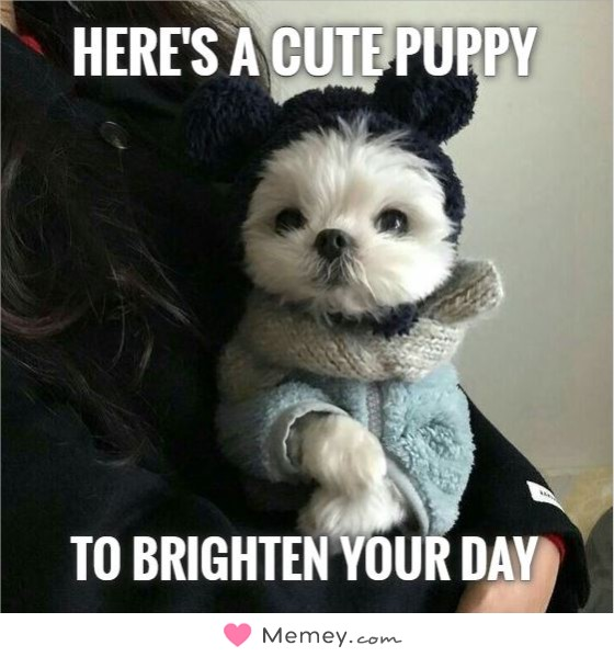 Here's a cute puppy To brighten your day