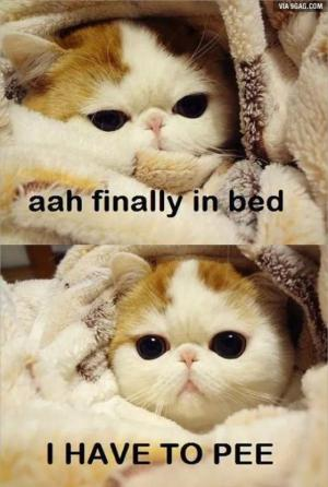Aah finally in bed. I have to pee!