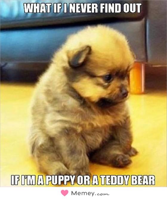 What if i never find out if I'm a puppy or a teddy bear