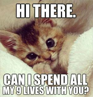Hi there Can i spend all my 9 lives with you