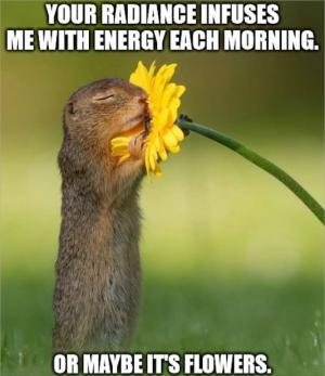 Your radiance infuses me with energy each morning. Or maybe its the flowers.