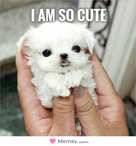 I am so cute